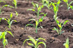 農業技術相談